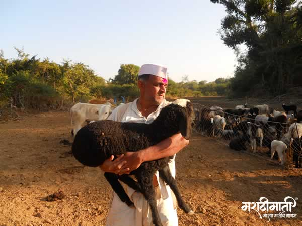 Sheep to Blanket- a journey worth an experience